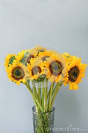 Bouquet of yellow sunflowers , flower in vase on old vintage table. Room morning. Gray background. Colors of autumn and