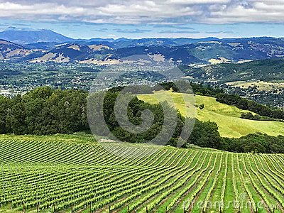 A view over the hills and vineyards of Sonoma County, California