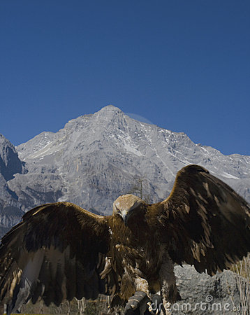 Eagle at Jade Dragon Snow Mountain