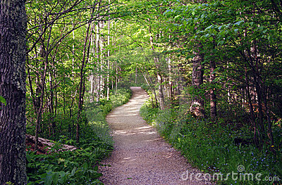 Summer Path in Woods