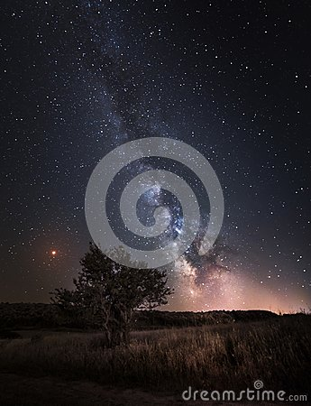 Silhouette of Tree with natural landscape and Milky Way galaxy.