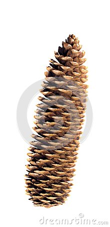 Pinecone on a White Background