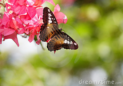 Butterfly and red flower on green background.