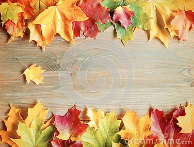 Fall background. Maple varicolored fall leaves on the wooden background