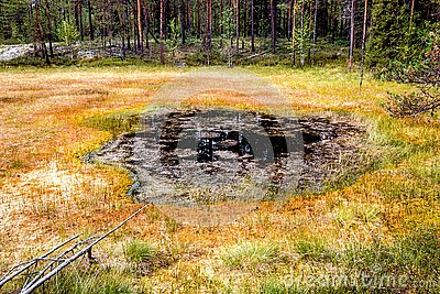 Formation of bogs oligotrophic In the climatic zone taiga, forest-tundra of the Arkhangelsk region.
