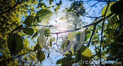 The rays of the sun penetrate through the spring foliage.
