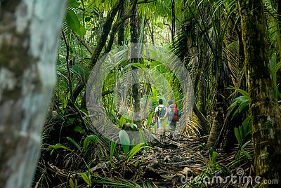 Hiking In the Jungle of the Corcovado