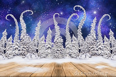 Christmas background with fir trees and night sky