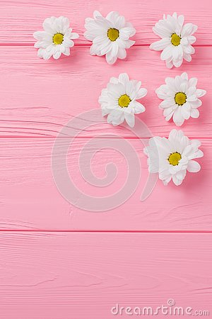 Daisy chamomile flowers disposition.