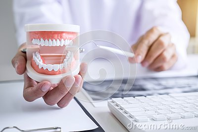 Dentist hand holding of jaw model of teeth and cleaning dental w