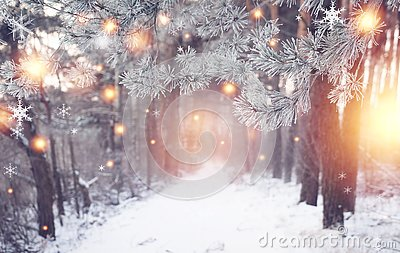 Christmas forest. Winter nature with shining magic snowflakes. Wonderful winter woodland. Xmas background. Frosty forest.