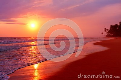 Scenic tropical beach with palm trees at sunset background, Sri Lanka