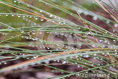 Raindrops glisten on grass after storm