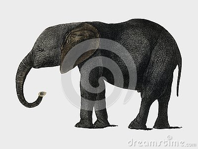 The History of the Earth and Animated Nature 1848 by Oliver Goldsmith 1728-1774, a portrait of a dark grey elephant. Digitally