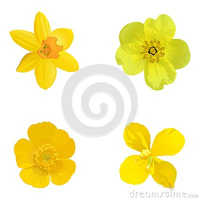 Yellow flowers isolated on a white background. Set.