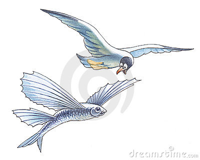 Seagull and flying fish