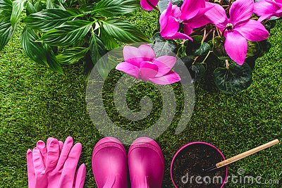 top view of protective gloves, rubber boots, flower pot with hand rake and flowers on grass