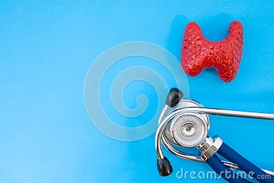 Anatomic study model of thyroid gland and stethoscope on blue background occupy half of photo, in second half - empty space for ti