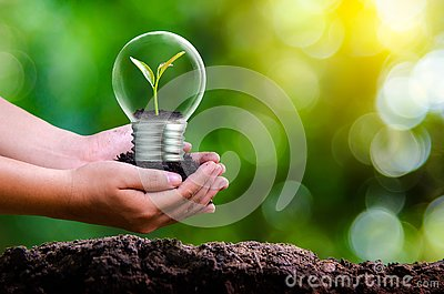 The forest and the trees are in the light. Concepts of environmental conservation and global warming plant growing inside lamp bul