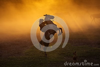 Cowboy puting his horse to stay in two feets at sunset with dust