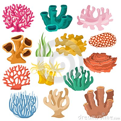Coral vector sea coralline or exotic cooralreef undersea illustration coralloidal set of natural marine fauna in ocean
