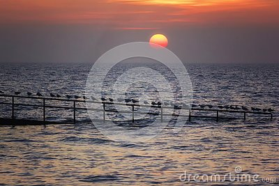 Sunset above the sea and seagulls
