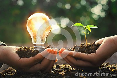 hand holding lightbulb with small tree and sunshine. concept ene