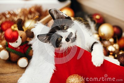 Cute kitty playing with red and gold baubles in box, ornaments a
