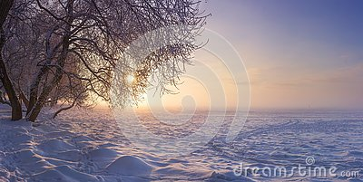 Winter landscape in the evening at sunset. Snow, frost in january. Winter nature background. Trees in sunlight