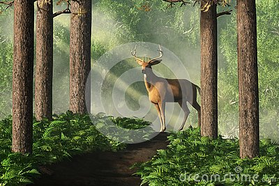 stock image of deer on a forest path