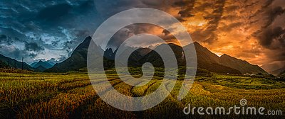 Rice fields on terraced with Mount Fansipan background at sunset
