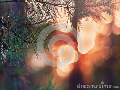 Pine Tree Fir Branch In The Winter Forest. Colorful Blurred Warm Christmas Lights In Background. Decoration, Design Concept With C
