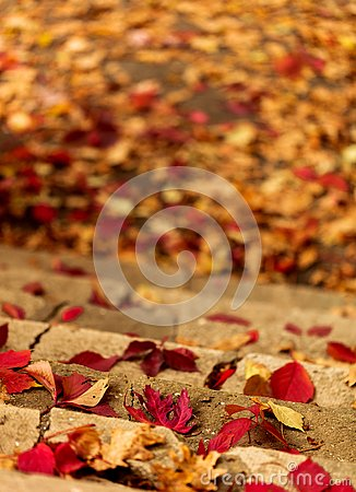 Autumn leaf fall. Red and yellow leaves on the destroyed old stone steps.