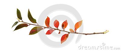 Twig of colorful autumn leaves