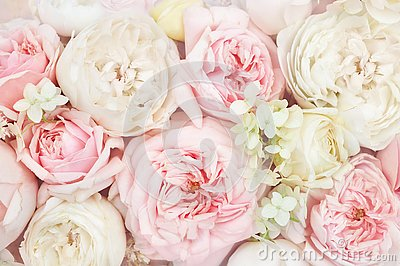 Summer blossoming delicate roses blooming flowers festive background, pastel and soft bouquet floral card, toned