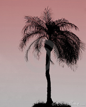 Silhouette of a single palm