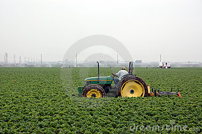 Strawberry field and tractor