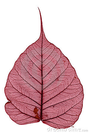 Red dried leave