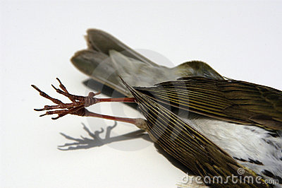 Detail of dead bird (tail)