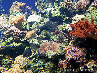 Fish tank with coral and sponges