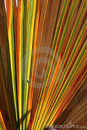 Colorful Palm Leaf