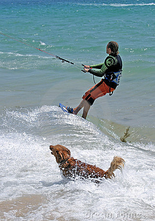 Man kitesurfing with golden retriever dog chasing him.