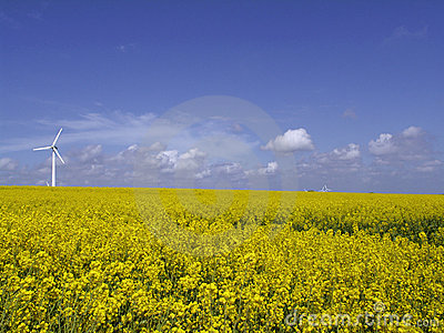 Wind turbine on rape field