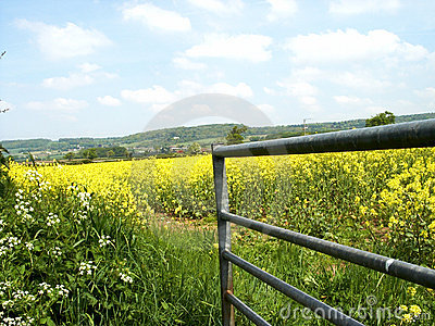 Gate & Yellow field
