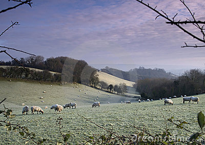 Frosty Sheep 2