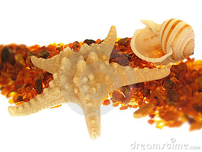 Starfish & Sea Shell