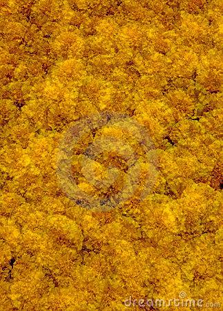 Marigolds Multiple Exposure