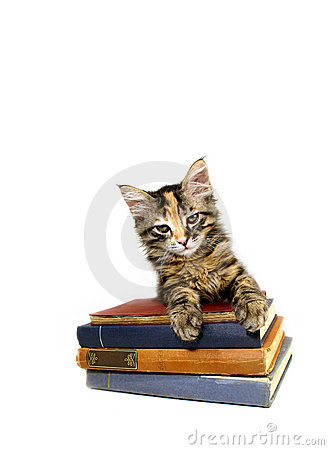 Kitten on old Books