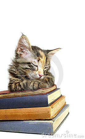 Kitten Asleep on Old Books