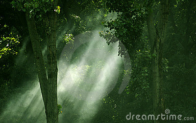 Streaming light through forest.